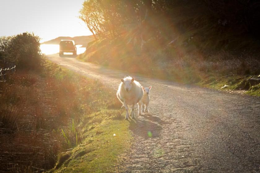 Sutherland – im hohen Norden von Schottland