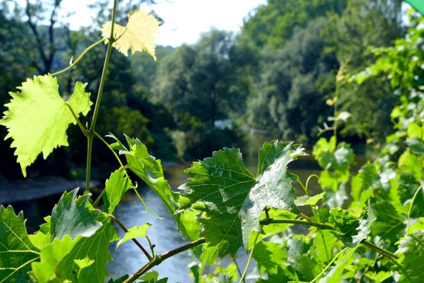 Saale-Unstrut: Wein, Radfahren und gutes Essen im nördlichsten Weinanbaugebiet von Deutschland