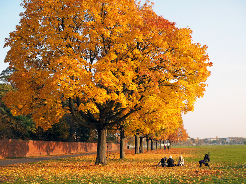 Goldener Herbst – Indian Summer