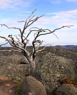 Australien – Granitformationen im Mount Buffalo