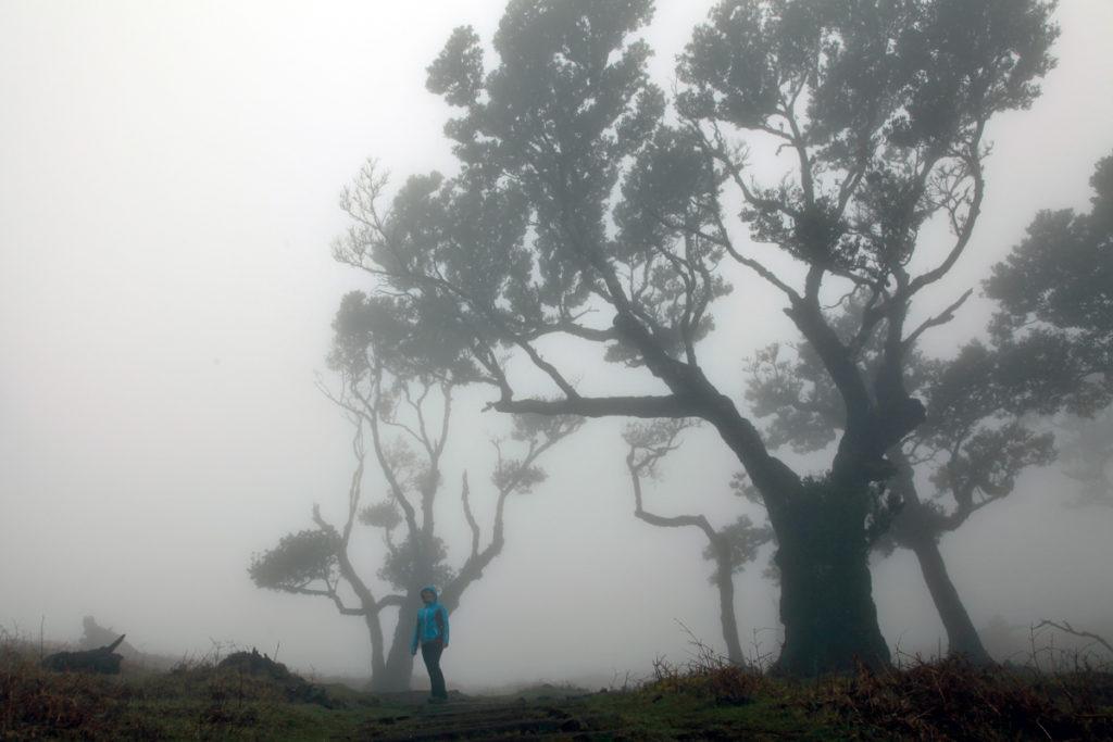 Madeira_Fanal_Nebelwald-4