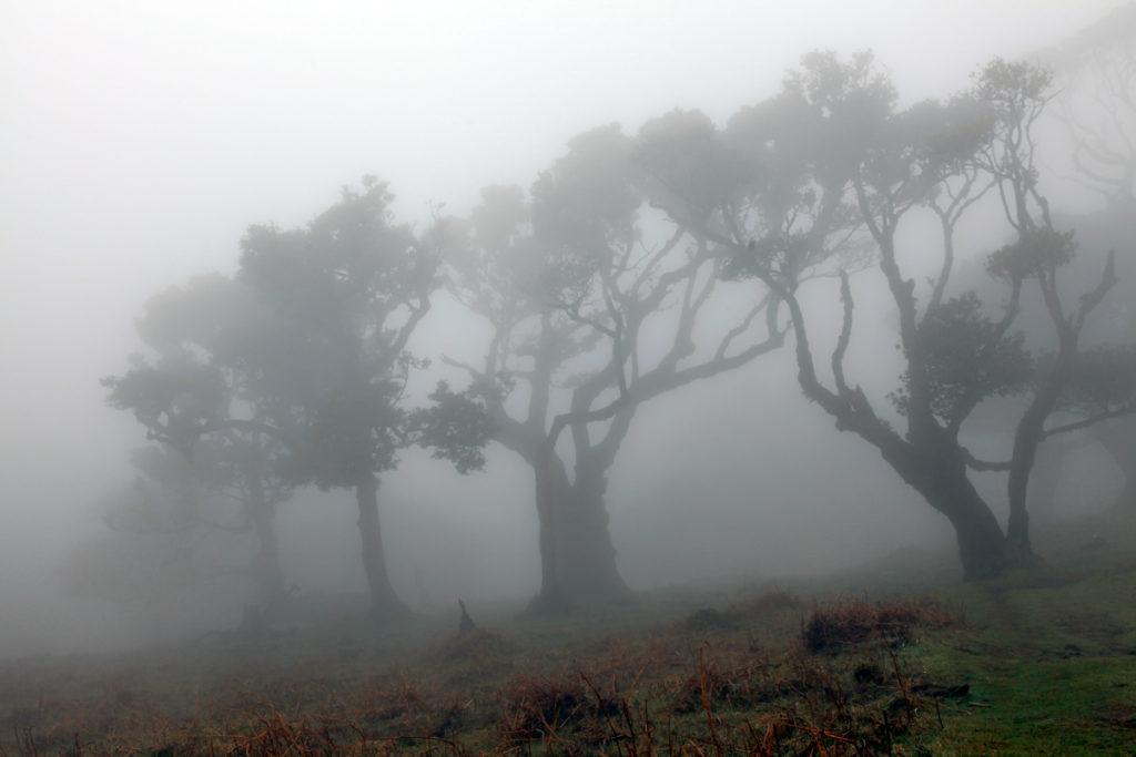 Madeira_Fanal_Nebelwald-5