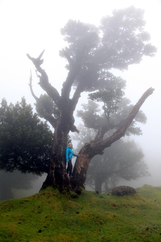 Madeira_Fanal_Nebelwald-7