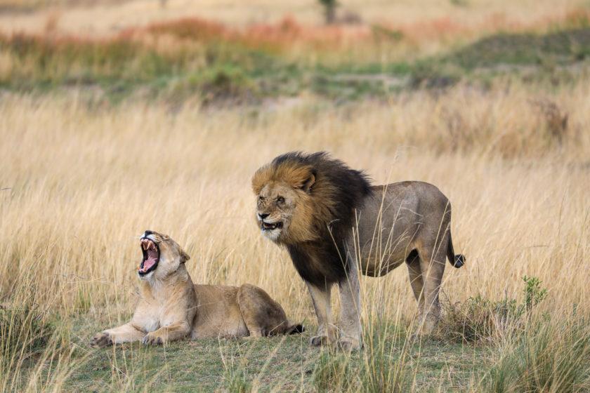 Traumhaftes Südafrika – 2,5-Wochen Rundreise von Johannesburg